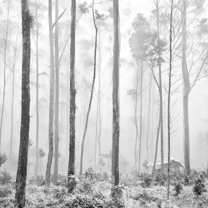 White Forest by Hengki24