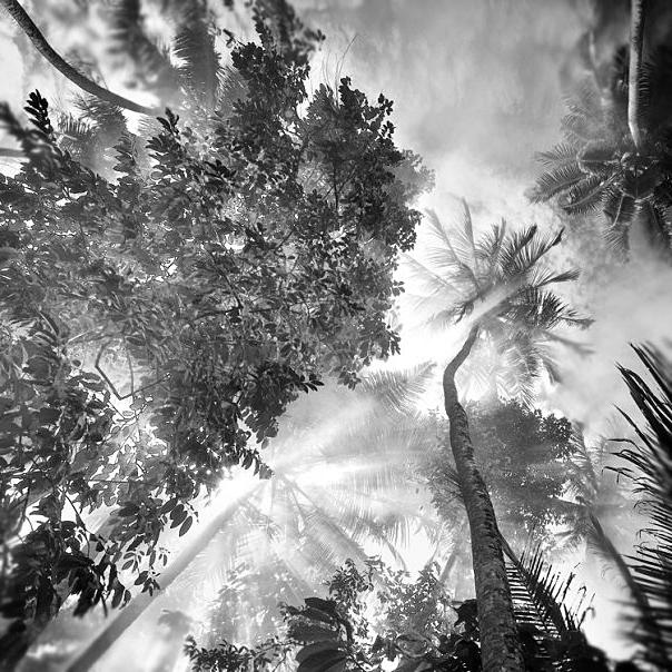 Forest Dance by Hengki24