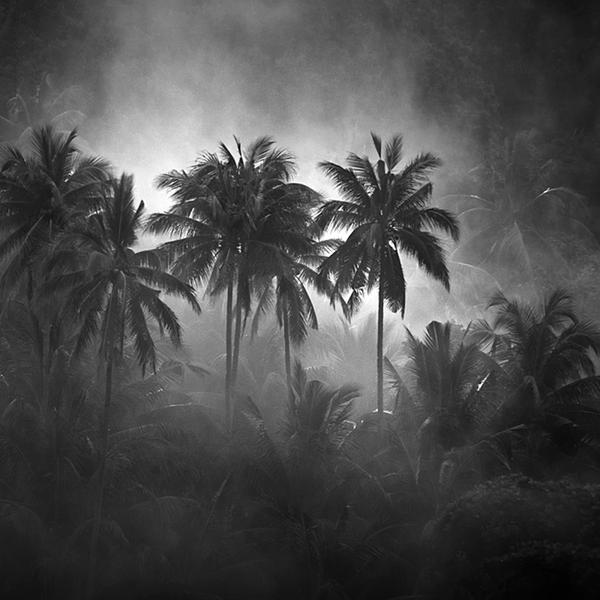 DeepForest by Hengki24