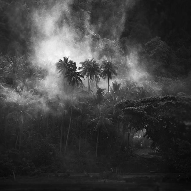 Mosquito by Hengki24