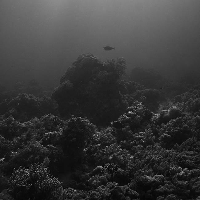 Corals by Hengki24