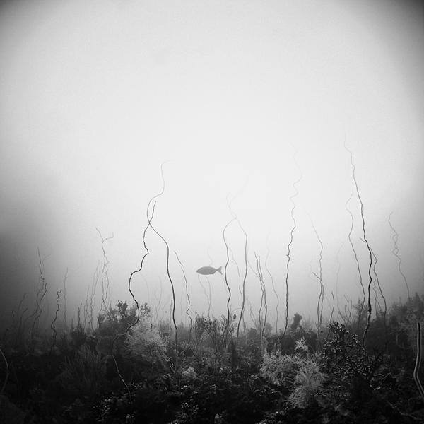 SeaWhip by Hengki24