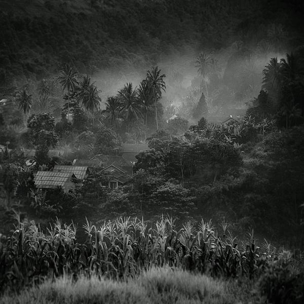 Coco Trees by Hengki24