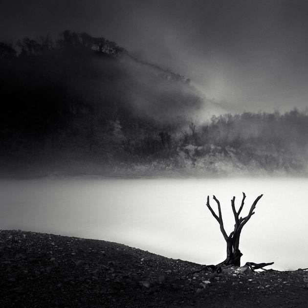 Stump by Hengki24