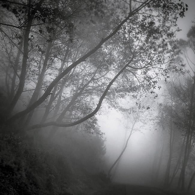 Javana Forest by Hengki24