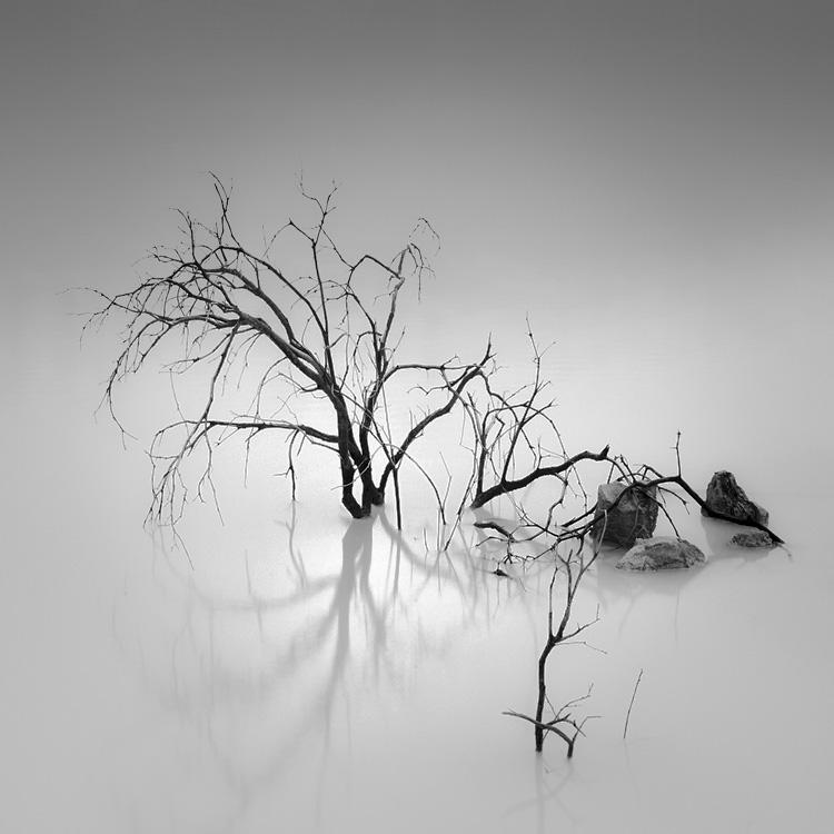 Shade Of Pale by Hengki24