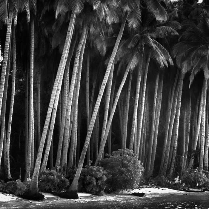 Coco Island by Hengki24