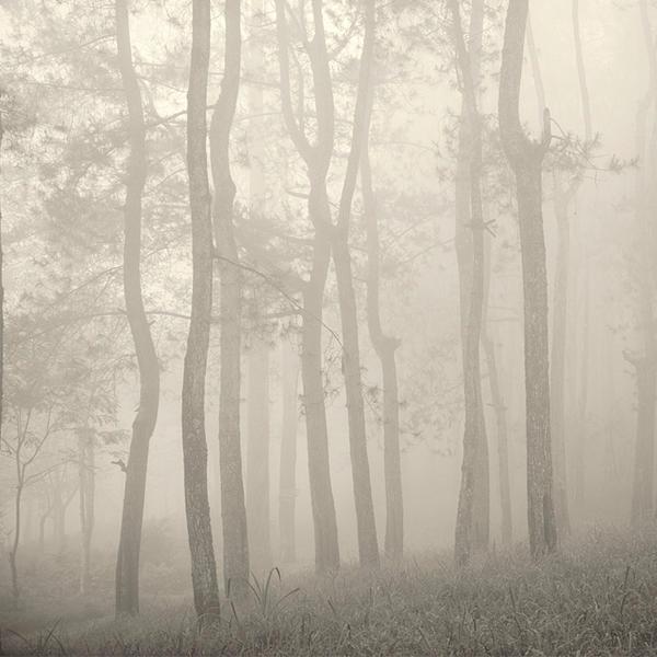 Misty Forest by Hengki24