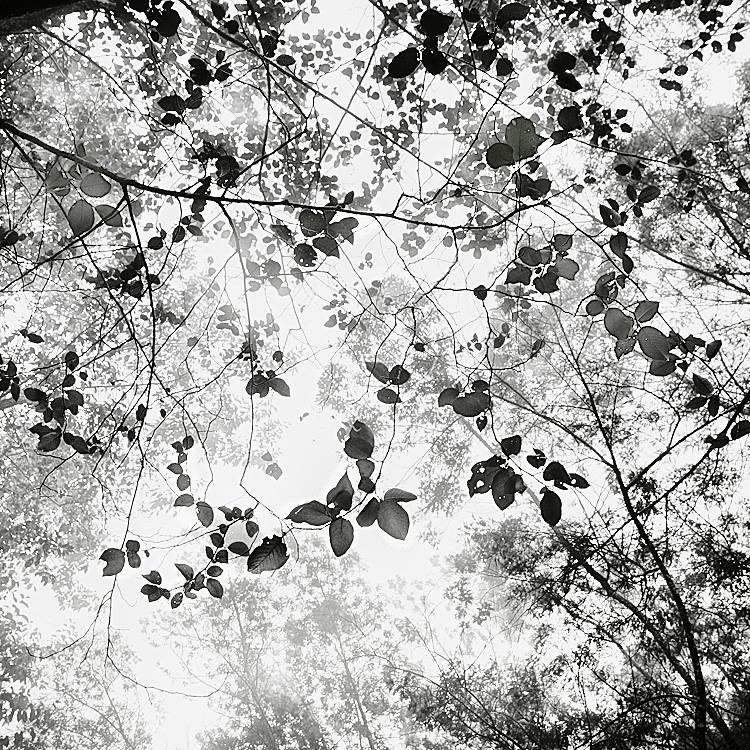 Foliage II by Hengki24