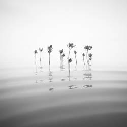 Mangrove Rhythm by Hengki24