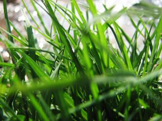 Grass WallPaper by hanyb