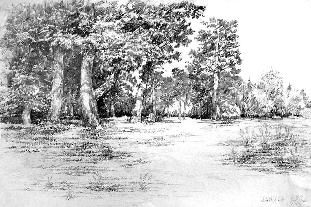pines by hipiz