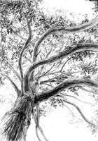 the pine by hipiz