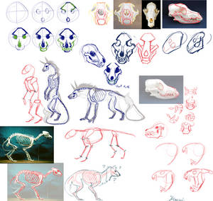 How to sketch canine skulls