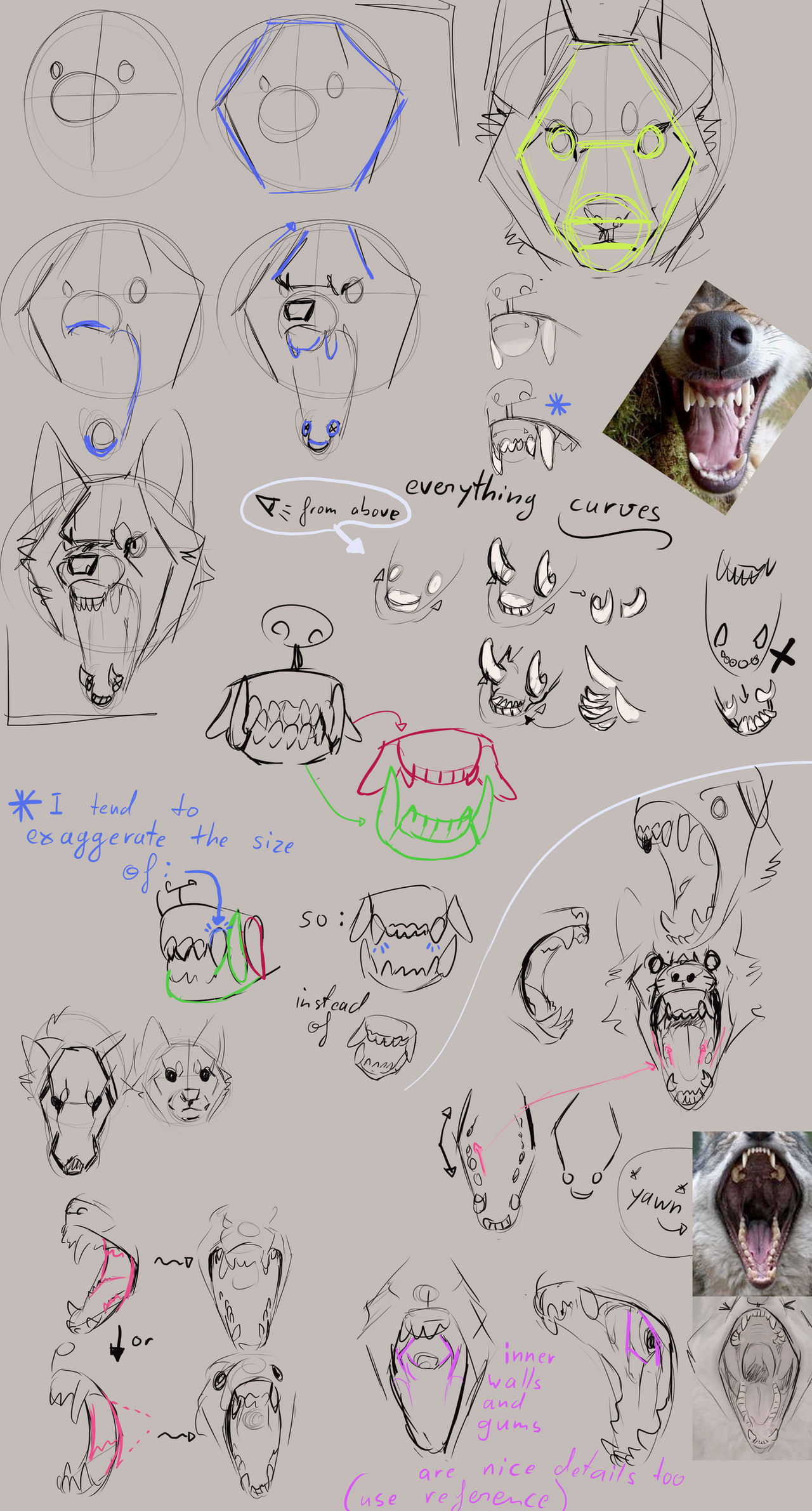 How to draw Snarly Wolves: Advice and Tipps