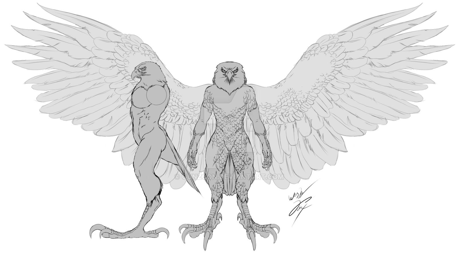 Bald eagle anatomy
