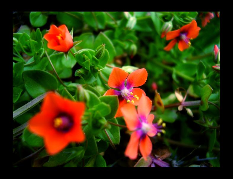Nature S Touch Abbotsford Bc Vt L