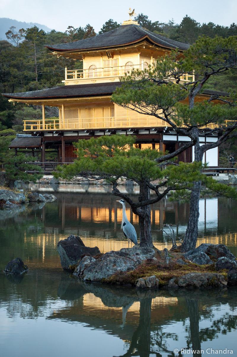 Kinkakuji, Kyoto by MeganeRid on DeviantArt