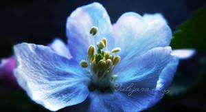 Night Cherry Blossom by JulijanaM