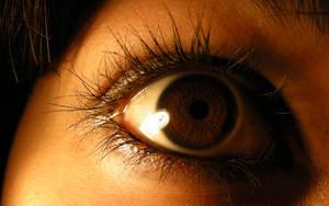 brown eye stock by saranichi
