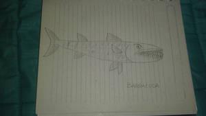 barracuda pez