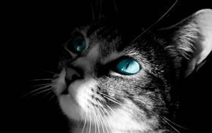 CatBlue by JackyC