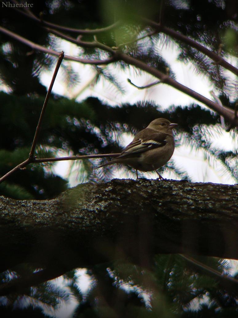 Birdie by Nemesis-V
