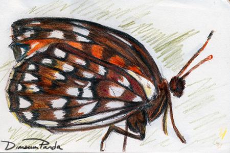 Sketchdiary 02 butterfly by DimsumPanda
