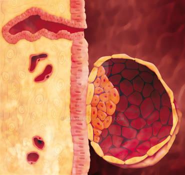 Blastocyst 2