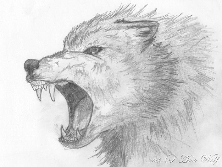 Angry Wolf by Kuutulensudet on DeviantArt