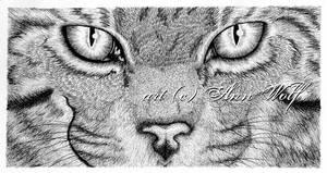 WildCat by Kuutulensudet