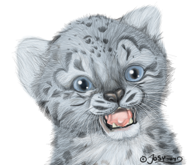 Snow leopard drawing - photo#28