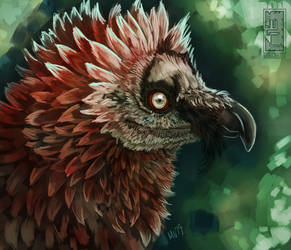 Bearded Vulture Study