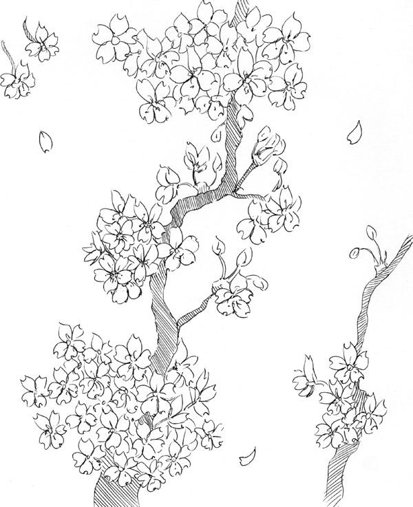 Blossom Flower Line Drawing : Black and white cherry blossom tree drawing pictures to