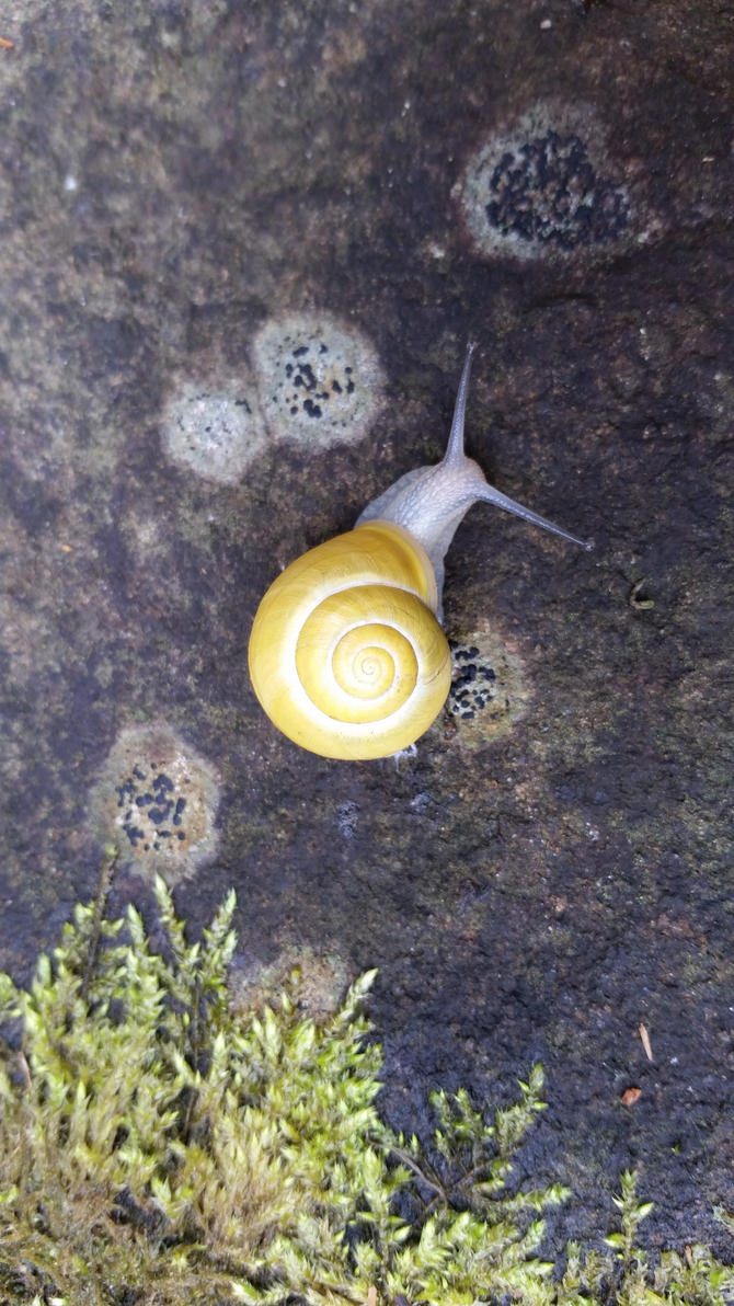 Snail 1 by andersonbi