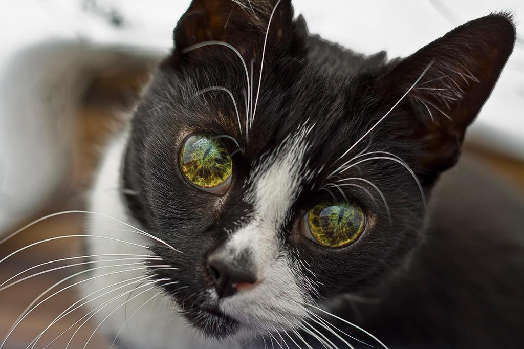 That eyes by P-ink-y