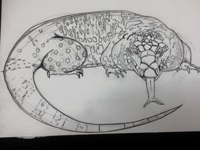unfinsihed b/w tegu sketch by Silhouett3s