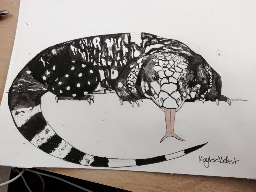 black and white tegu by Silhouett3s