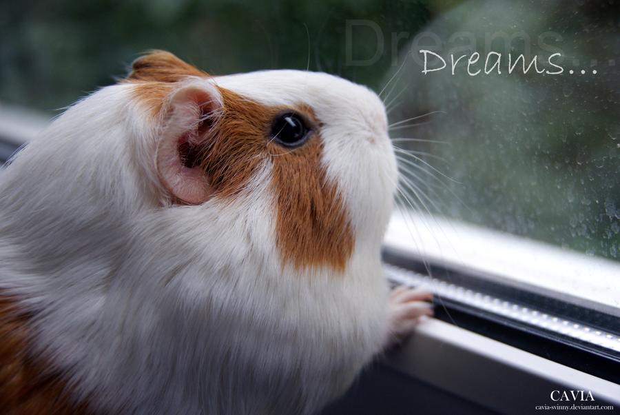 Dreams by CAVIA-Piggy