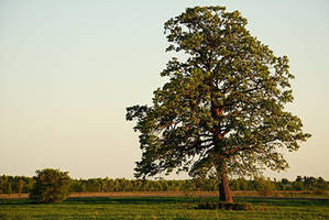 Country Tree by PaulMcKinnon