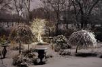 Garden on December 23rd