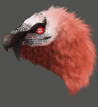 Bearded Vulture Study by SmokedTraash