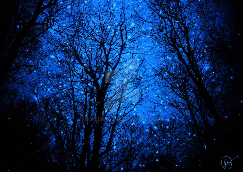 starry forest wallpaper - photo #11