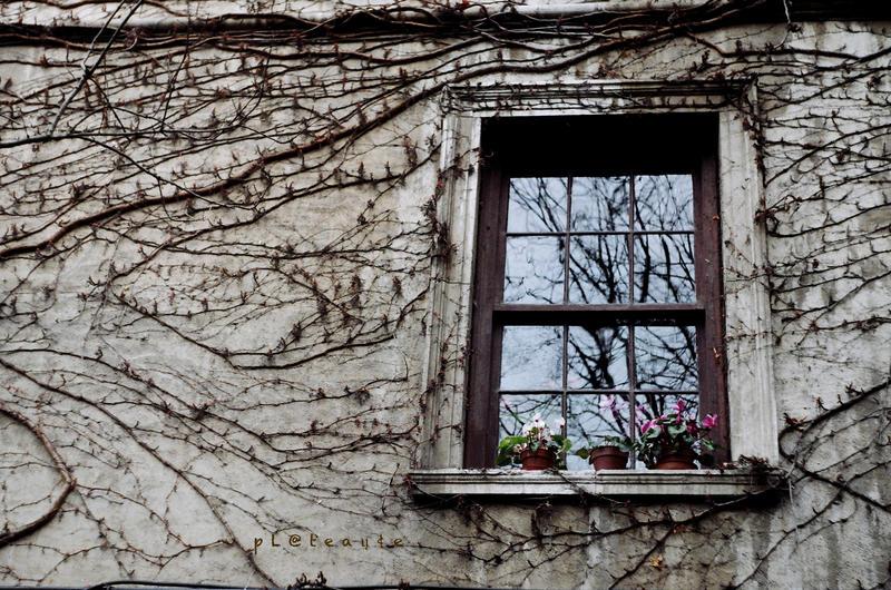 Prozori koji govore Spontaneous_mirror_by_pLateauce