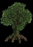 Tree Ivy