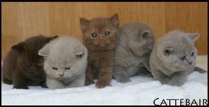 Kittens - 20 sept