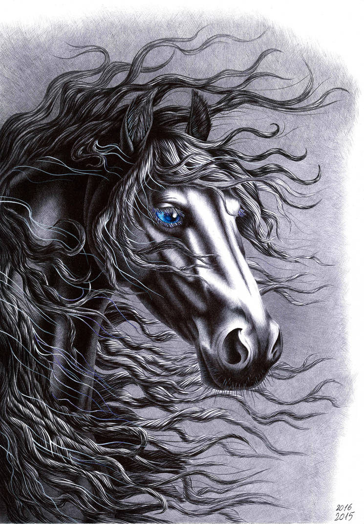 Friesian horse head