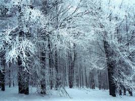 Frozen wonderland by Vinganita