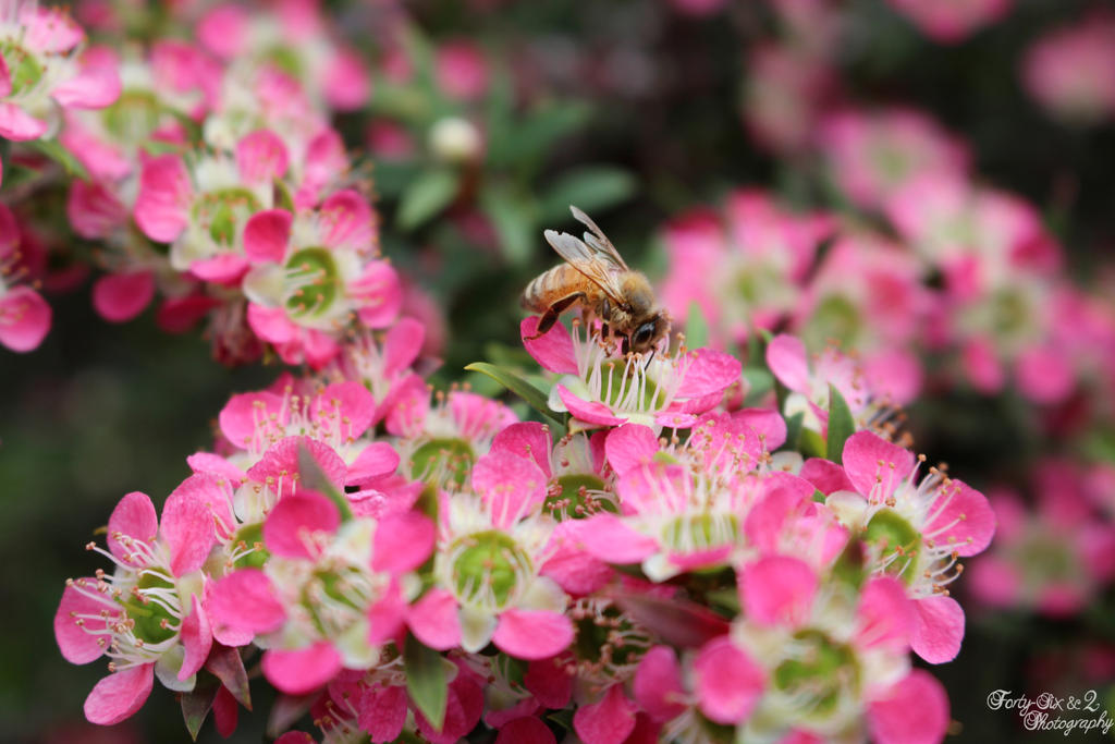Bee by FortySixand2Photos