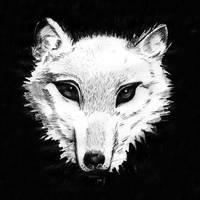 Wolf by tekitsune